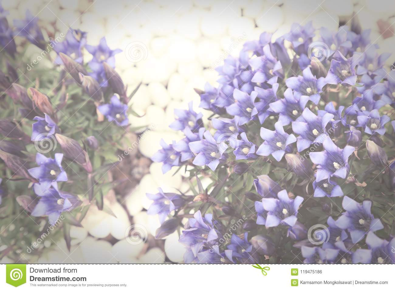 Small Shrub With Blue Flowers On White Pebbles Vintage Toned Stock
