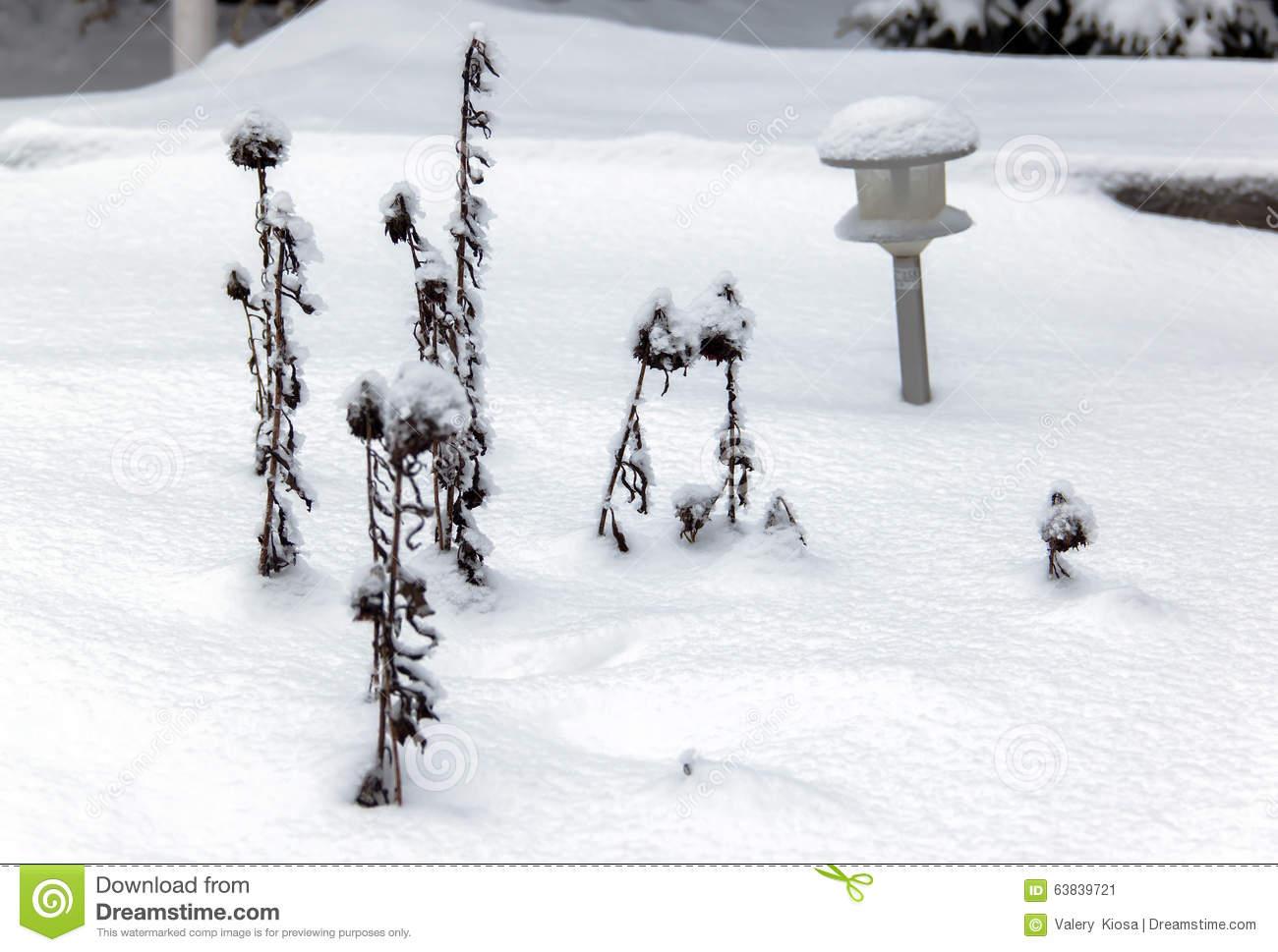 small shrubs and garden lights under the snow stock image image