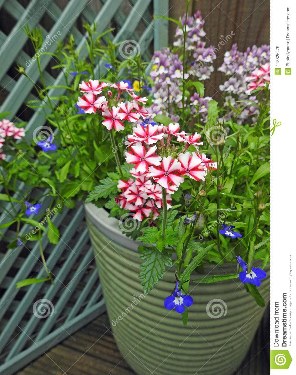 Dreamstime.com & Small Space Garden Potted Flowers And Plants Stock Image - Image of ...