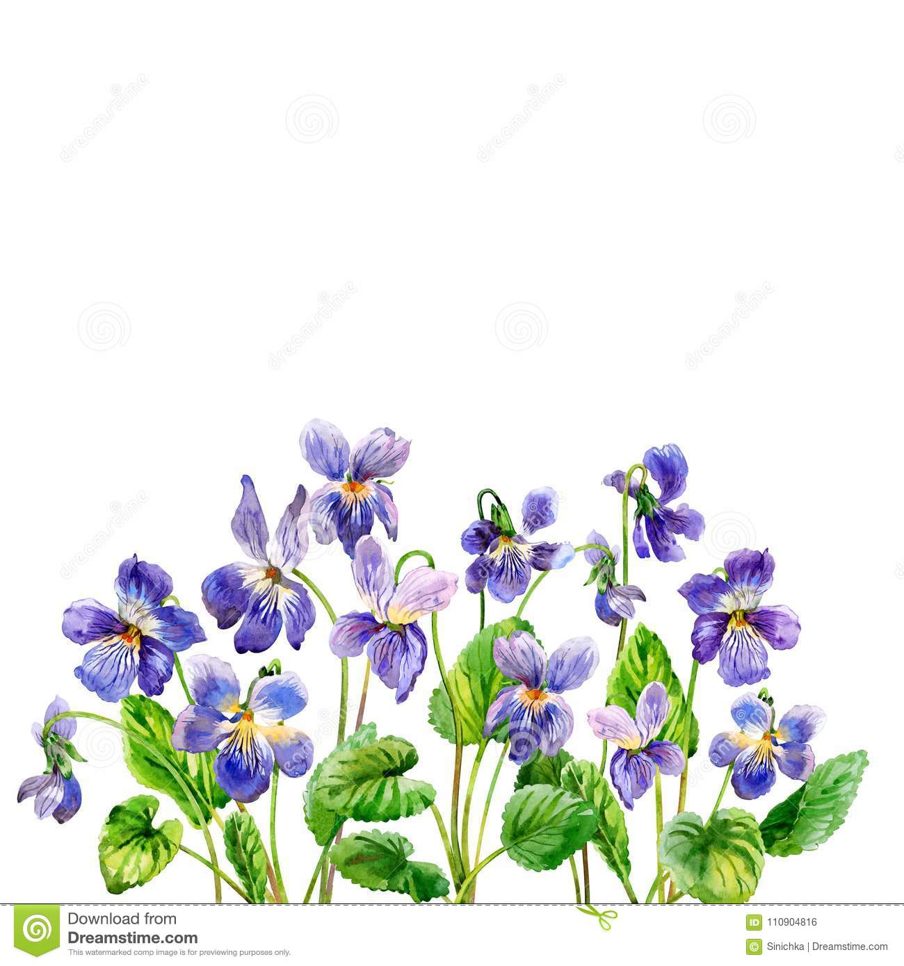 Purple Spring Flowers A Fragrant Violets Watercolor Stock