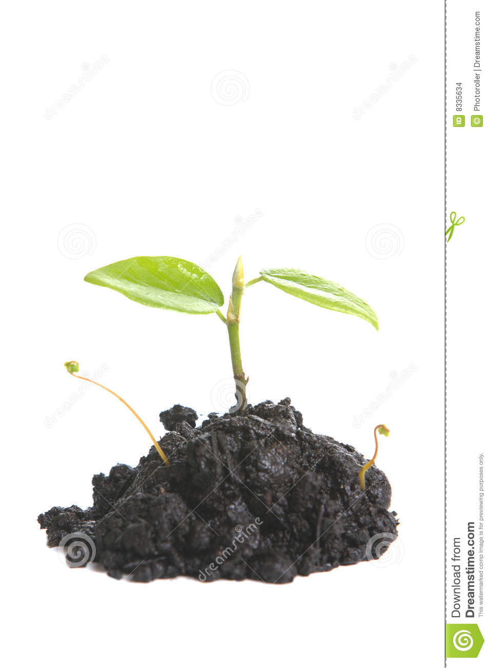 Small Sprout Stock Images Image 8335634