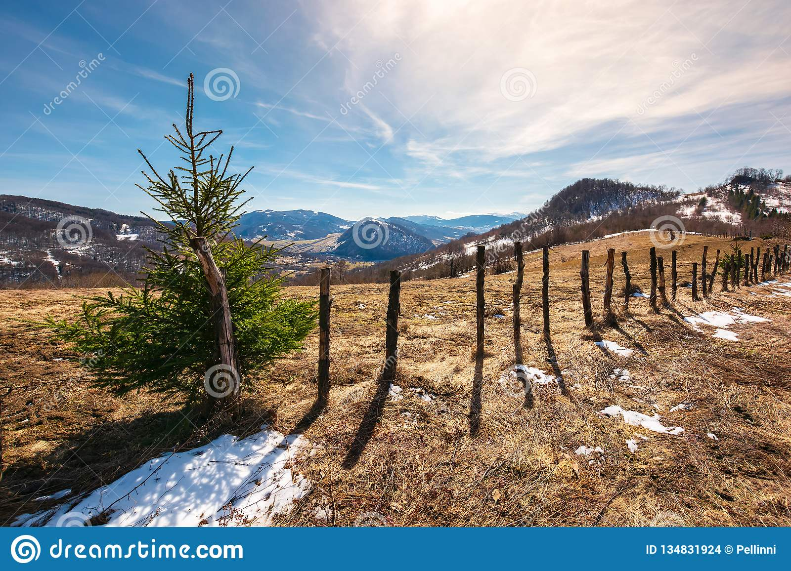 Small spruce tree by the fence on top of a hill