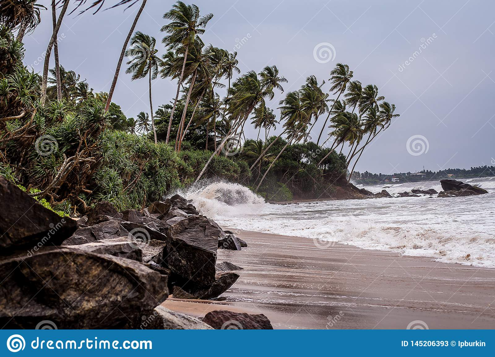 A small storm on the rocky beach of Sri Lanka. waves on the wild beach. palm grove on the Indian ocean