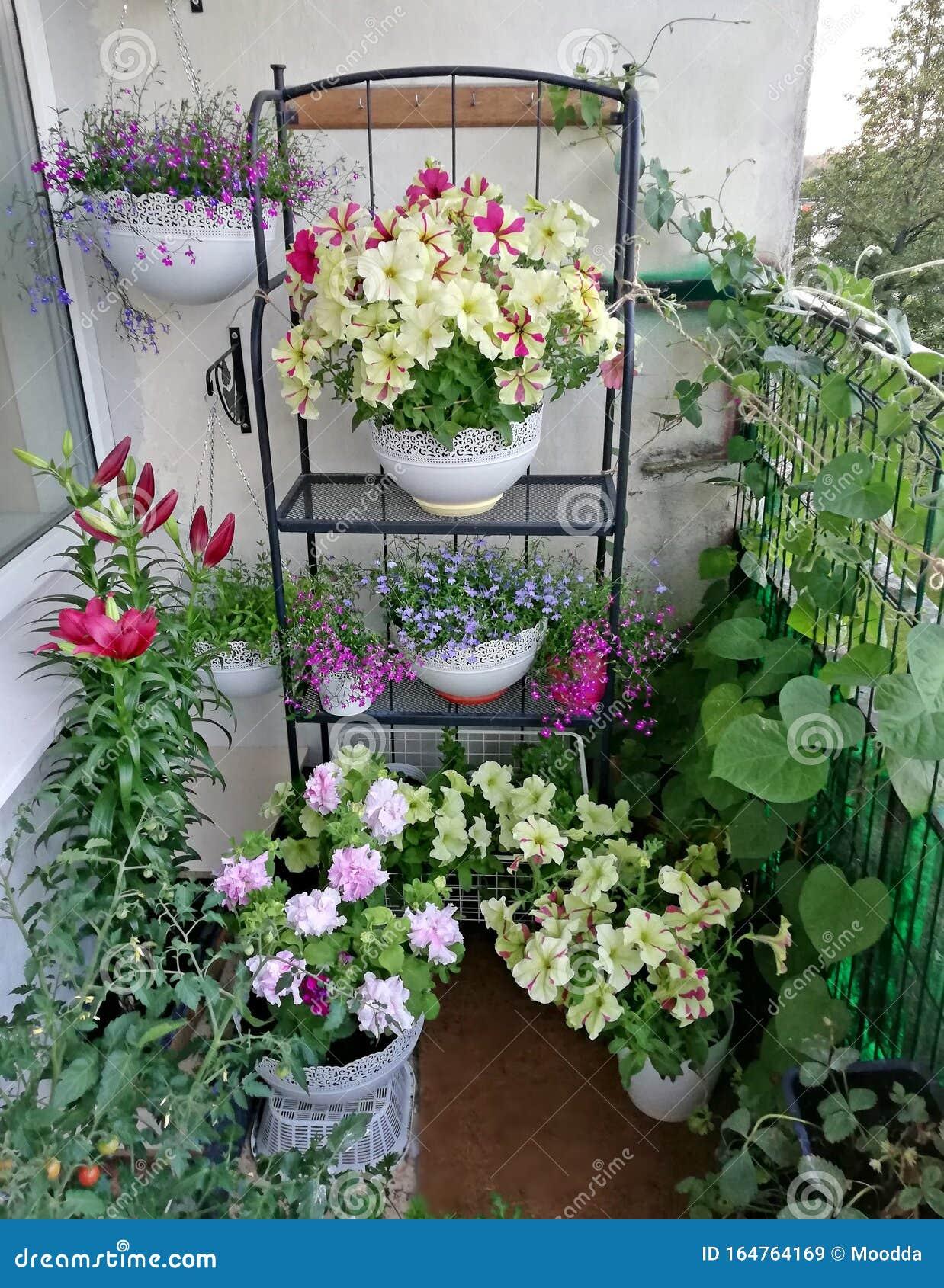 Small Sunny Urban Garden On The Balcony Stock Image Image Of Gardens Balcony 164764169