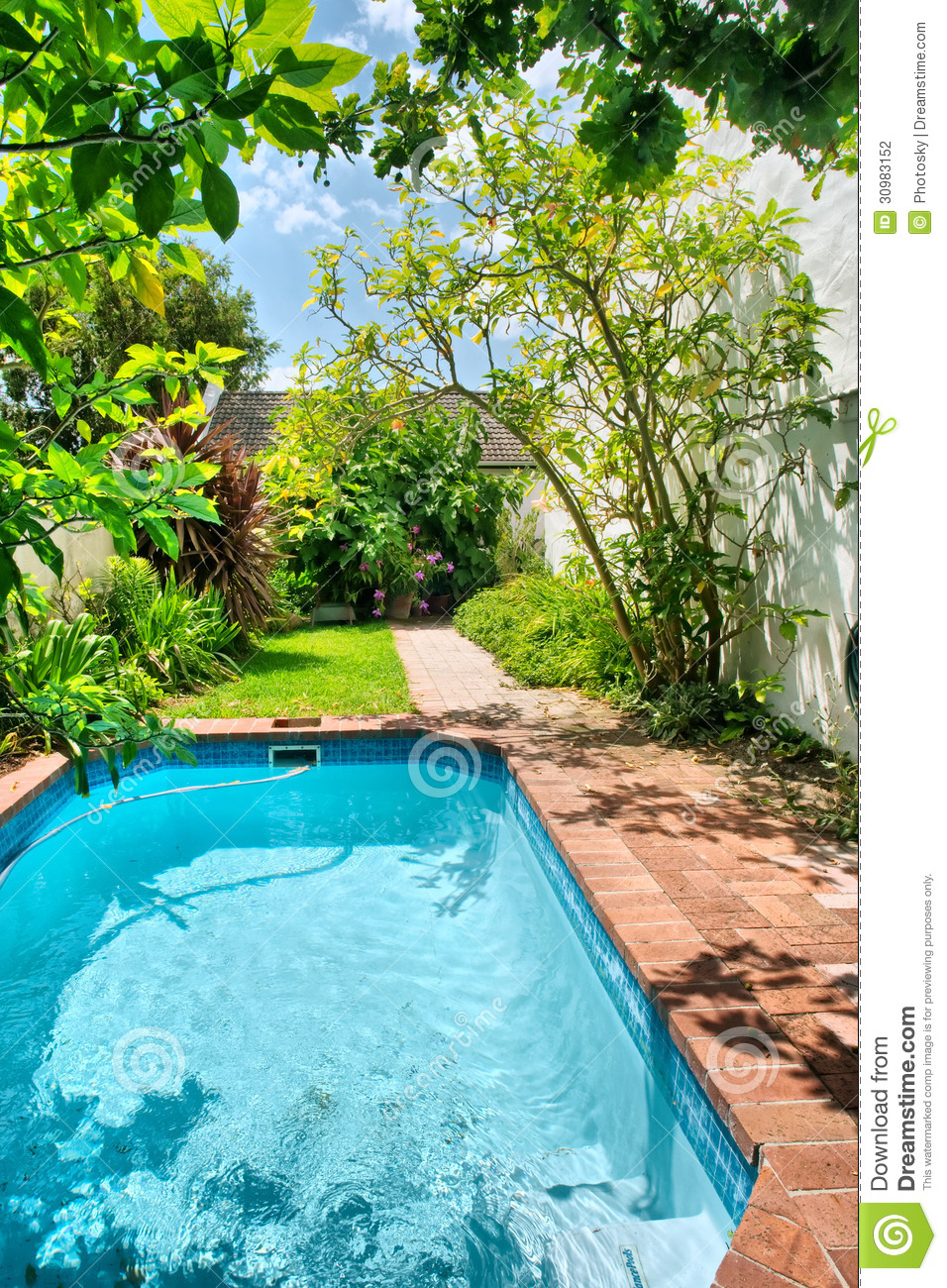 Small swimming pool and garden stock photography image for Gardens around pools