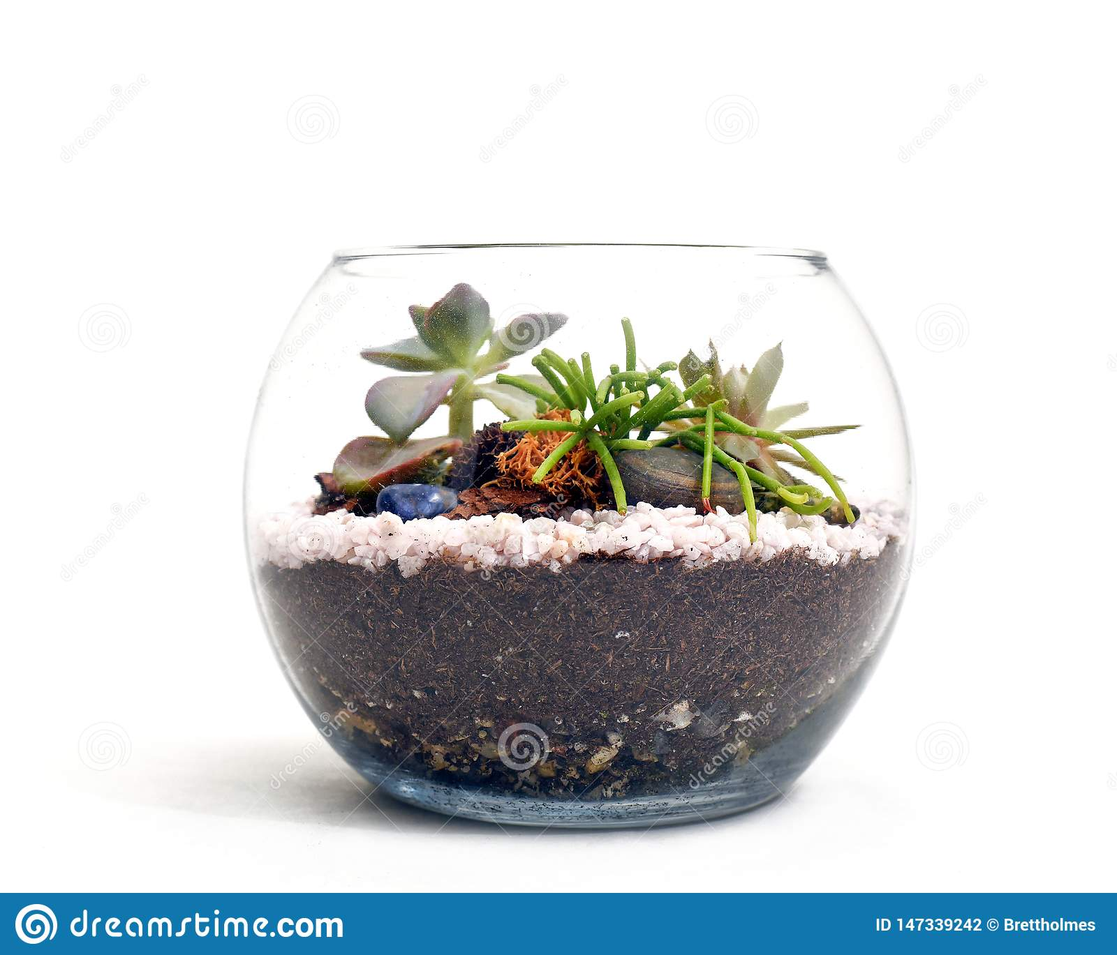 Small Terrarium With Succulents On White Background Stock Photo Image Of Environment Blank 147339242