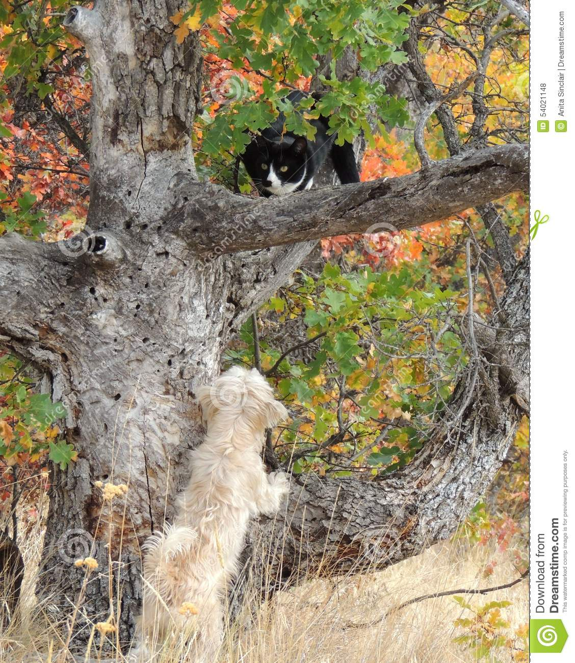 Dog Chases Cat Up Tree