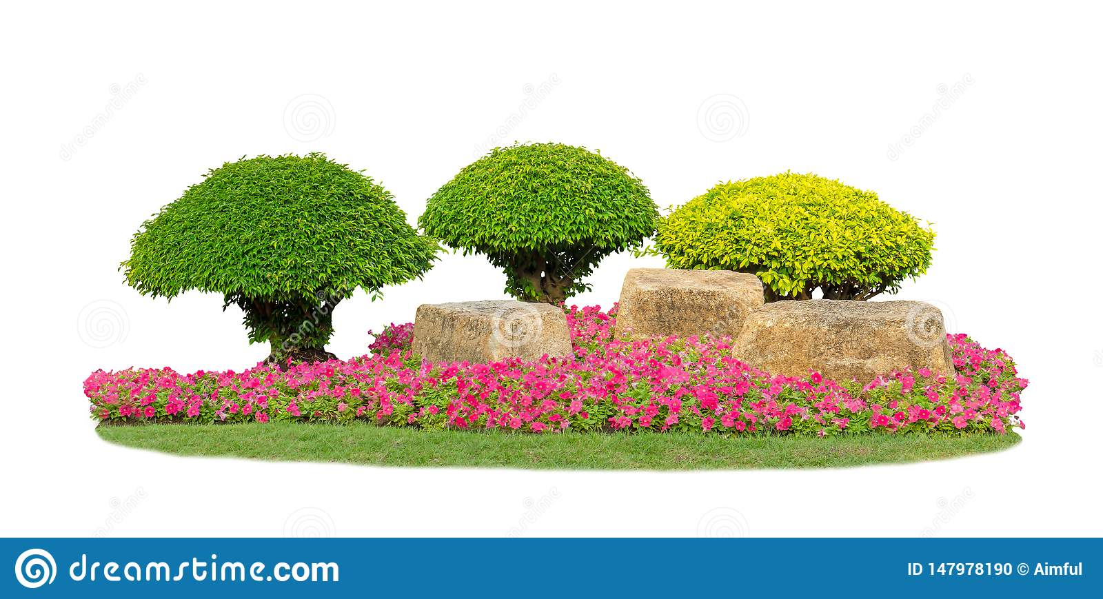 Small Topiary Trees Pruning Garden Isolated On White Background