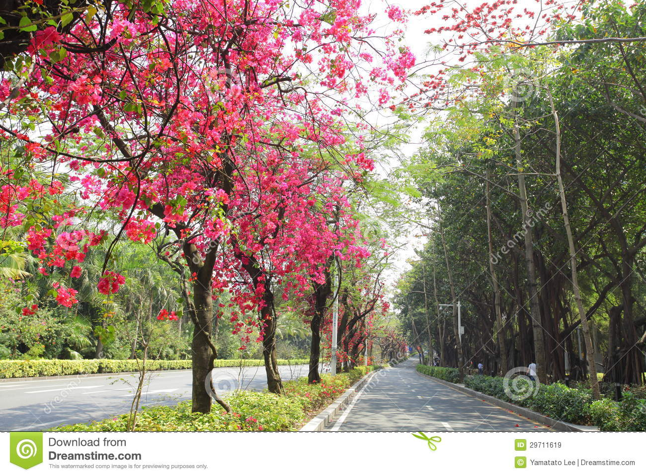 The Flower Road Of China Royalty Free Stock Images - Image: 29711619