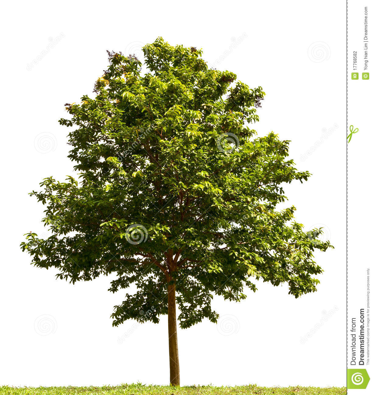 Small tree stock photo image of green sunny nature for Short trees