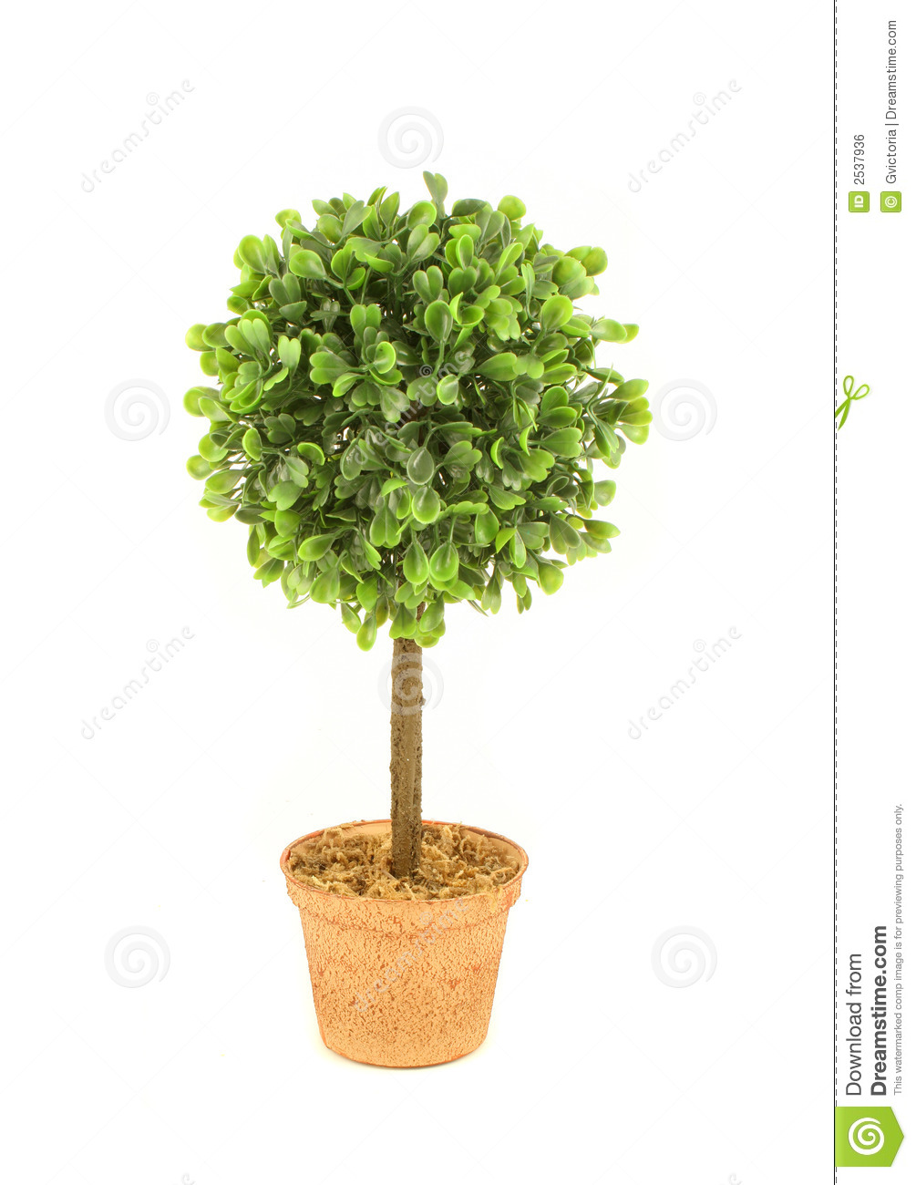 Small tree stock photo image of leaves bonzai plants for Short trees