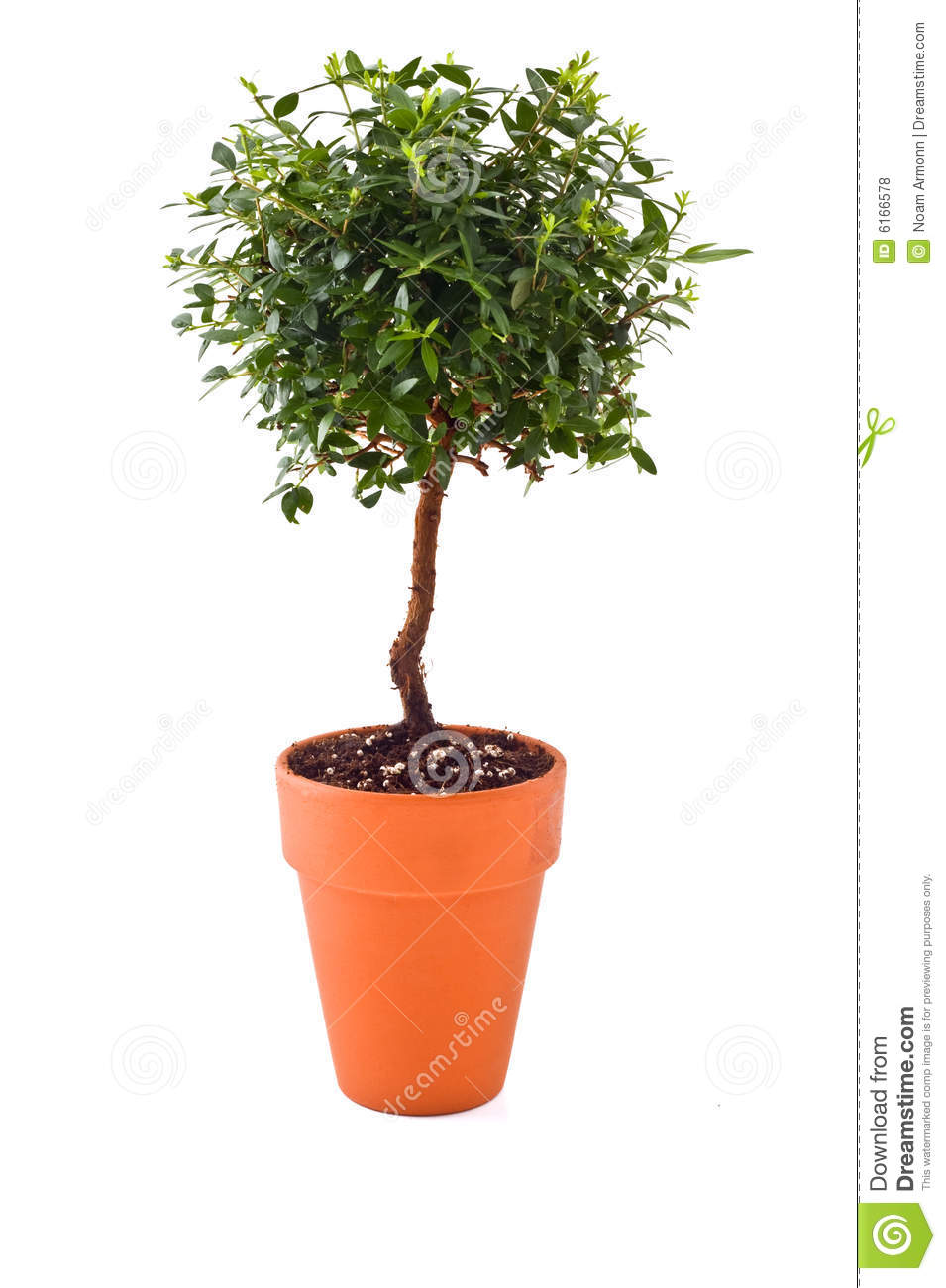 Small Tree Stock Photo Image Of Nature Asia Hobby