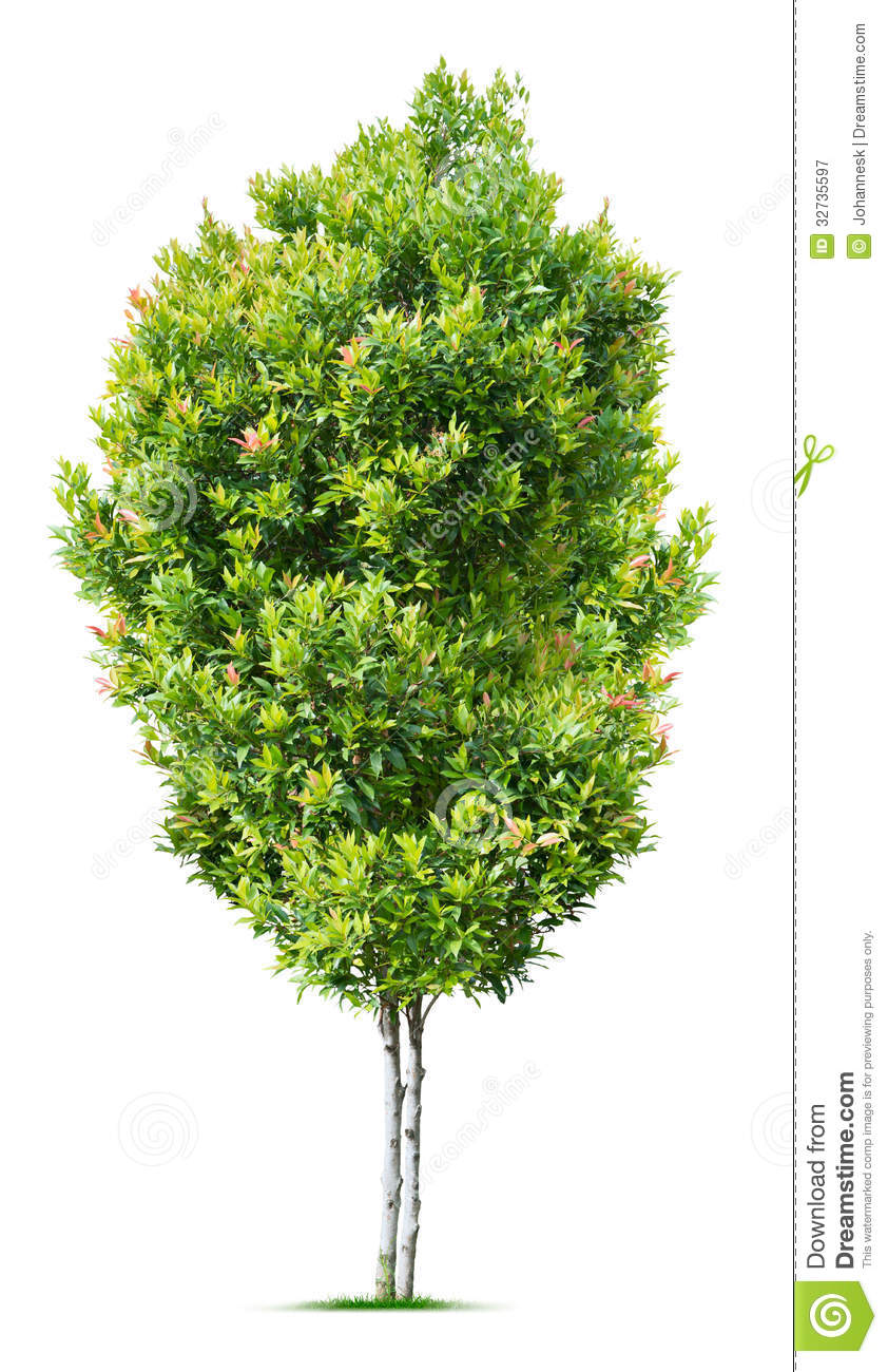 Small Tree Royalty Free Stock Photography - Image: 32735597