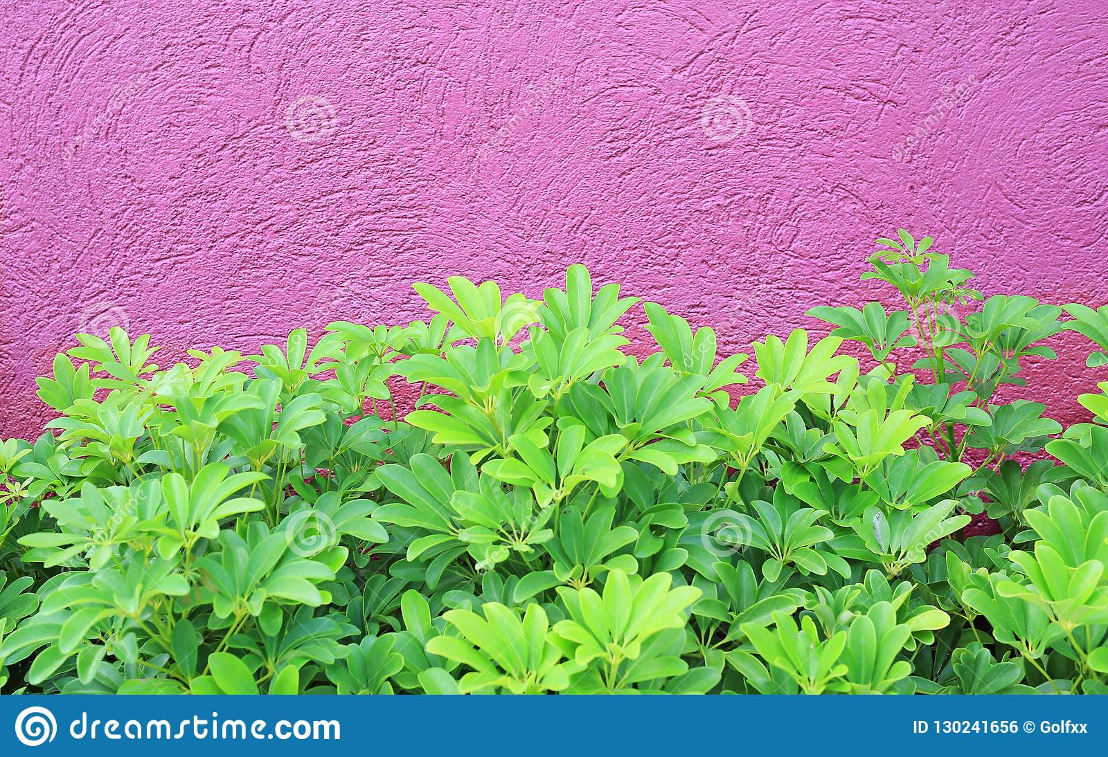 Small Tree and rough deep pink wall background
