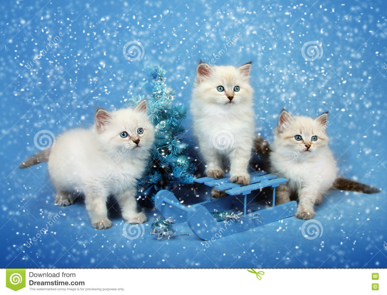 Small trio kittens on sledge and xmas tree