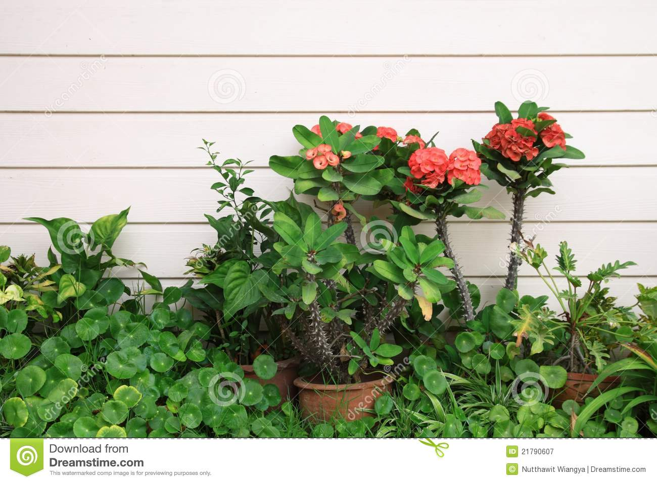 Small Tropical Garden Royalty Free Stock Photography