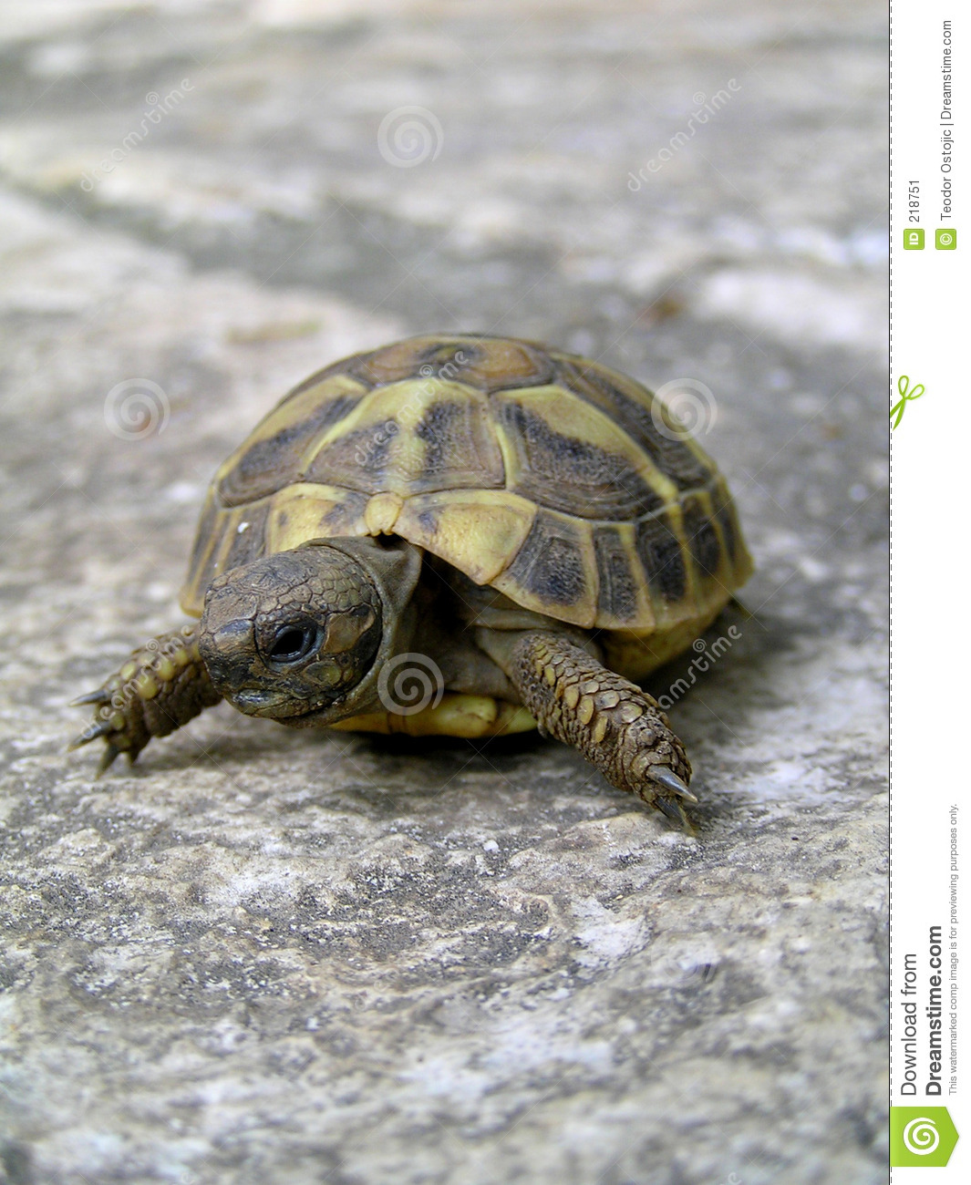 Small Turtle Stock Image - Image: 218751