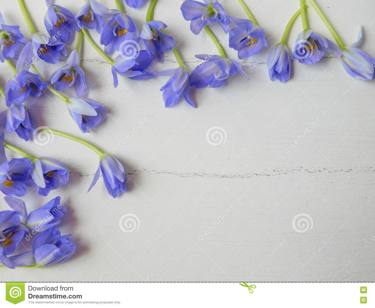 Small Violet Flowers On White Background Stock Image - Image of ...
