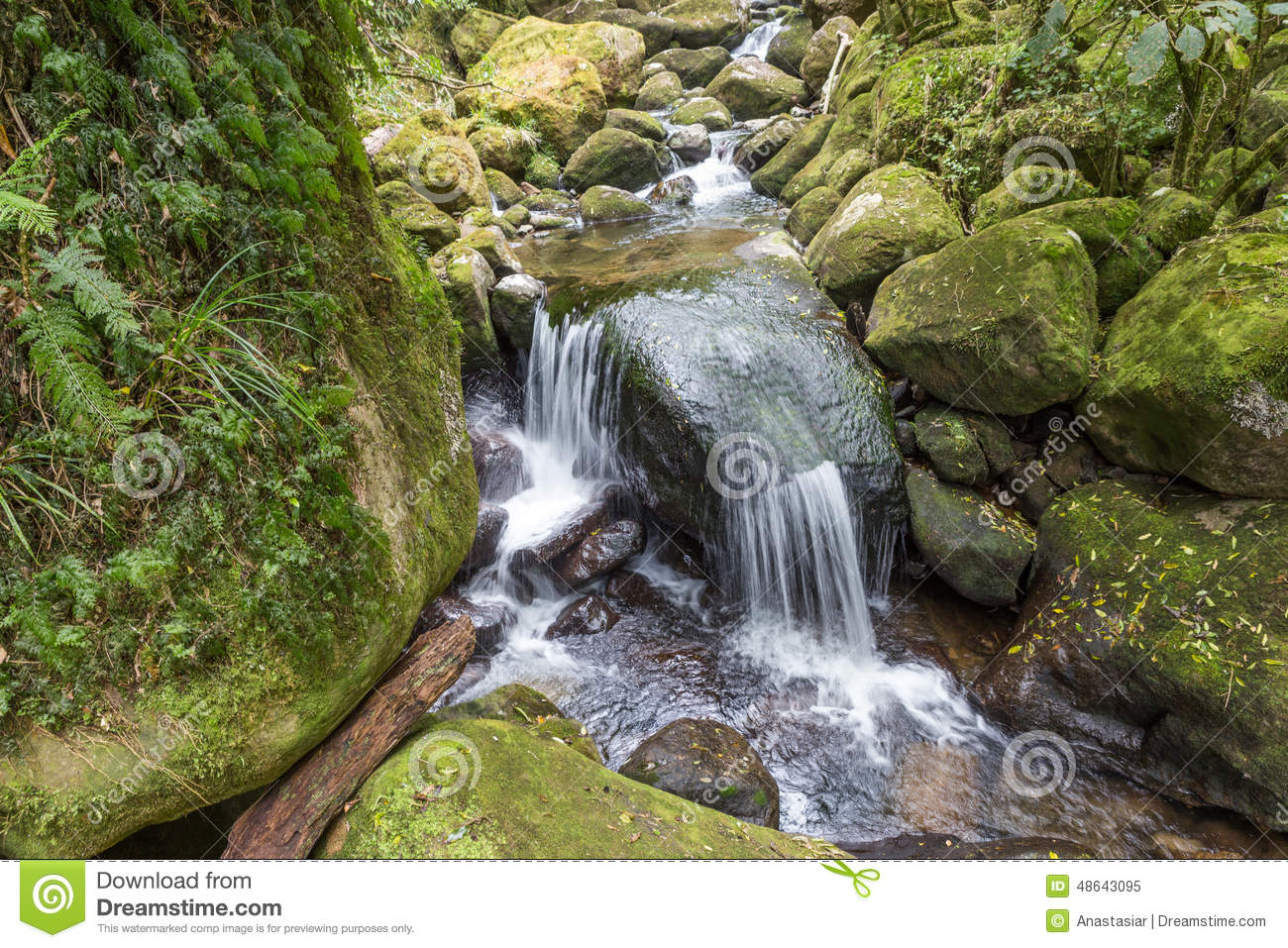 Waterfall cascade on the green mossy rocks in Kaimai ranges reserve ...