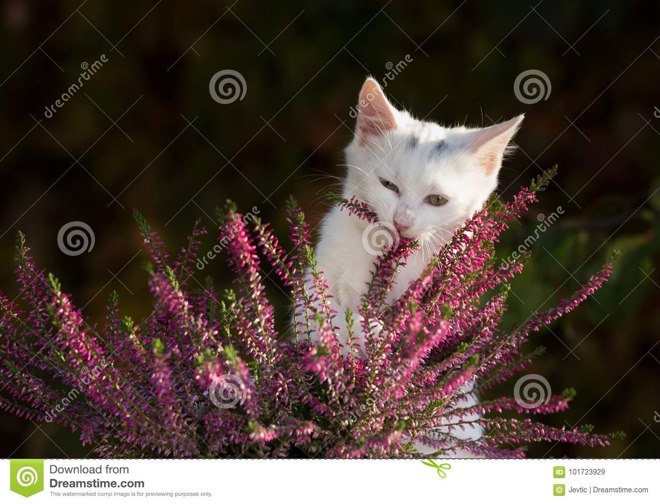 Small White Cat Playing With Flower Stock Image Image Of Hair