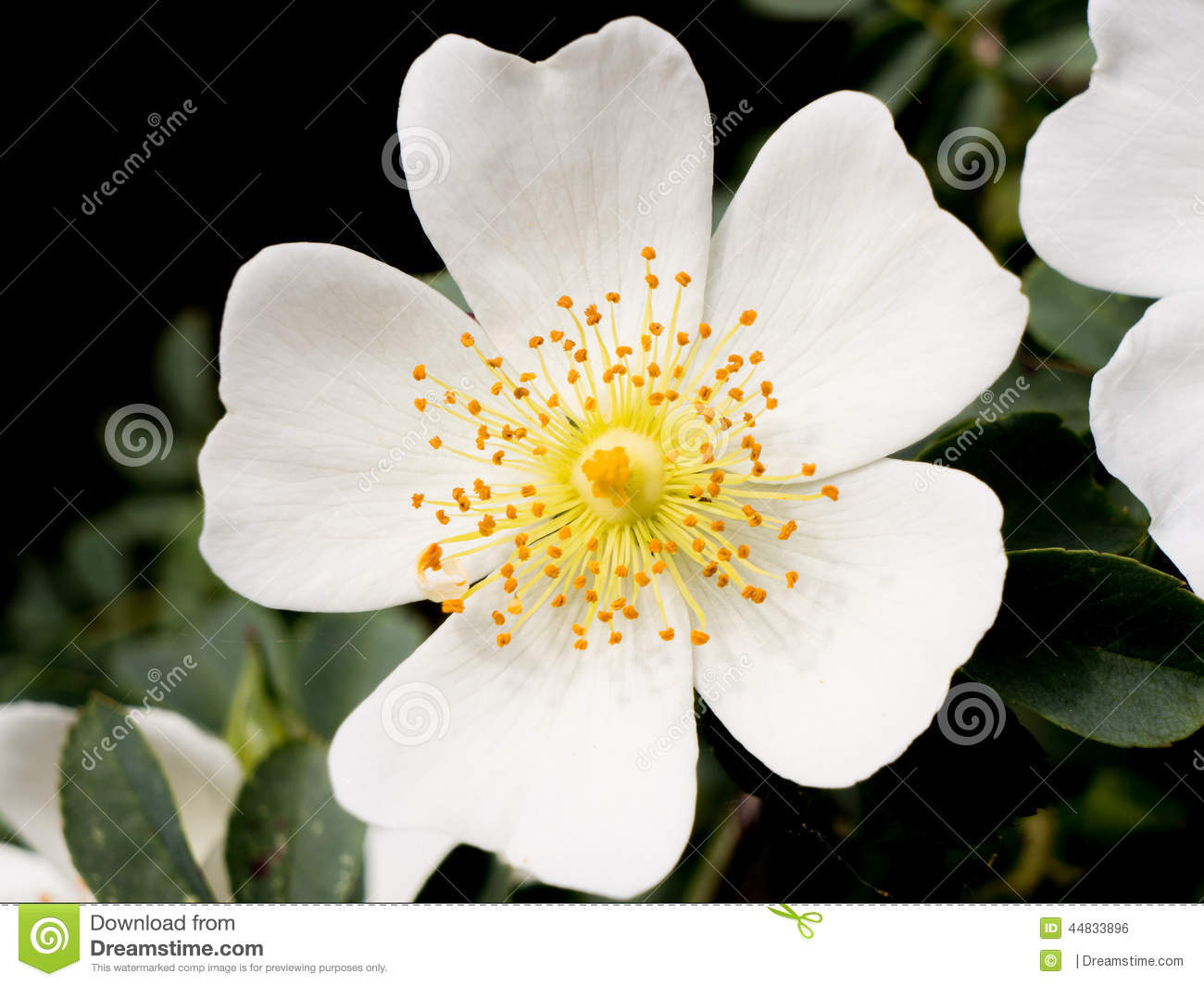 Small White Flower Stock Photo Image Of Flower Plant 44833896