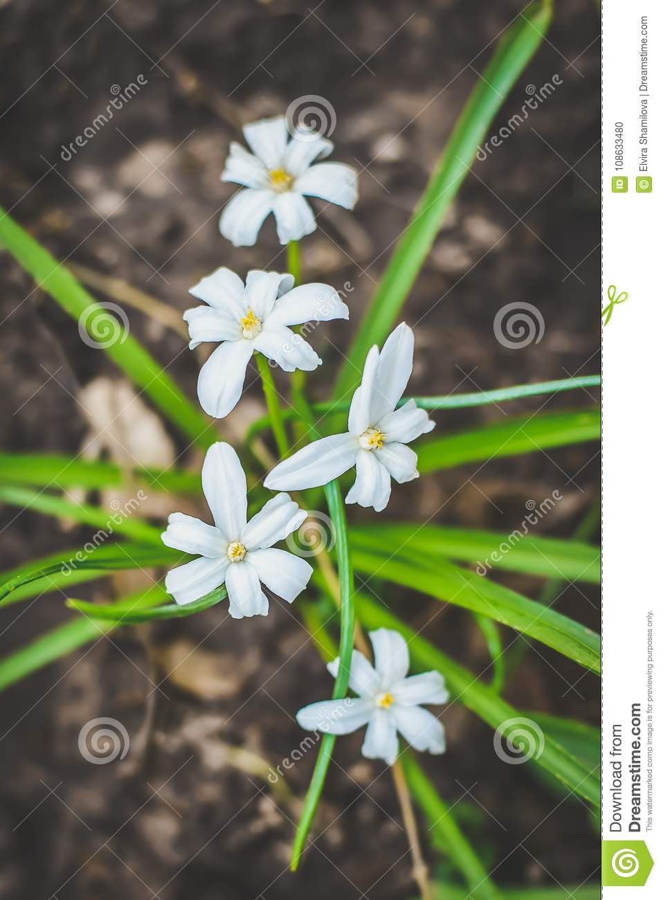 Small white flowers with green leaves stock photo image of small white flowers with green leaves mightylinksfo