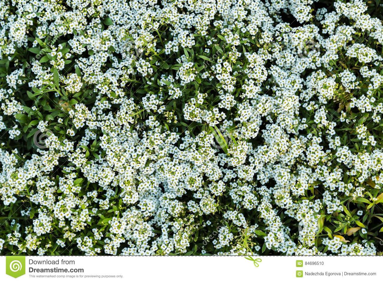 Small white flowers and green leaves garden top view stock for Small green outdoor plants