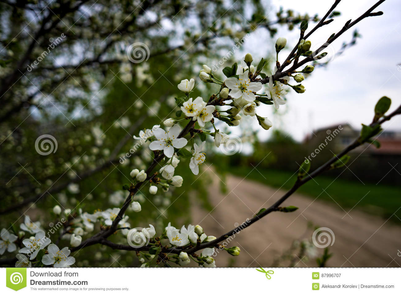 Small white flowers on a tree stock image image of floral spring branch of a tree with blossoming white small flowers on a blurred background spring background with white flowers on a tree branch mightylinksfo