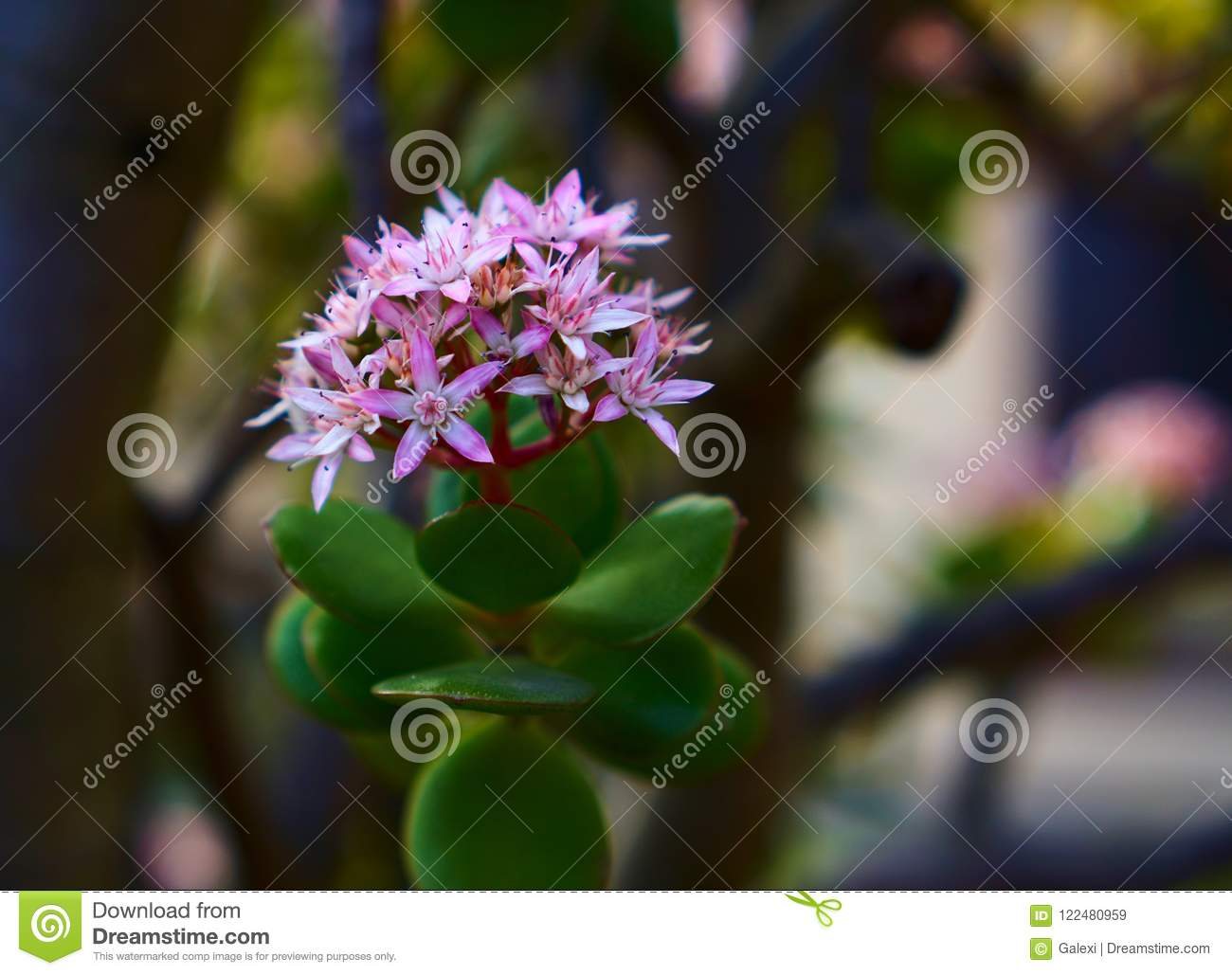 Small White And Pink Flowers Stock Image Image Of Macro Garden