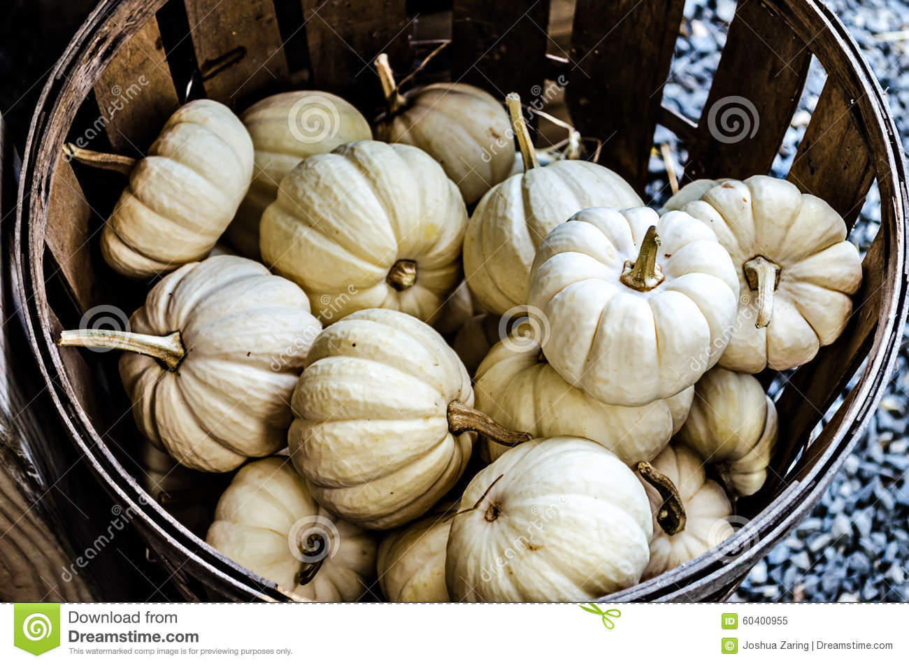 small white pumpkins in basket stock photo image 60400955