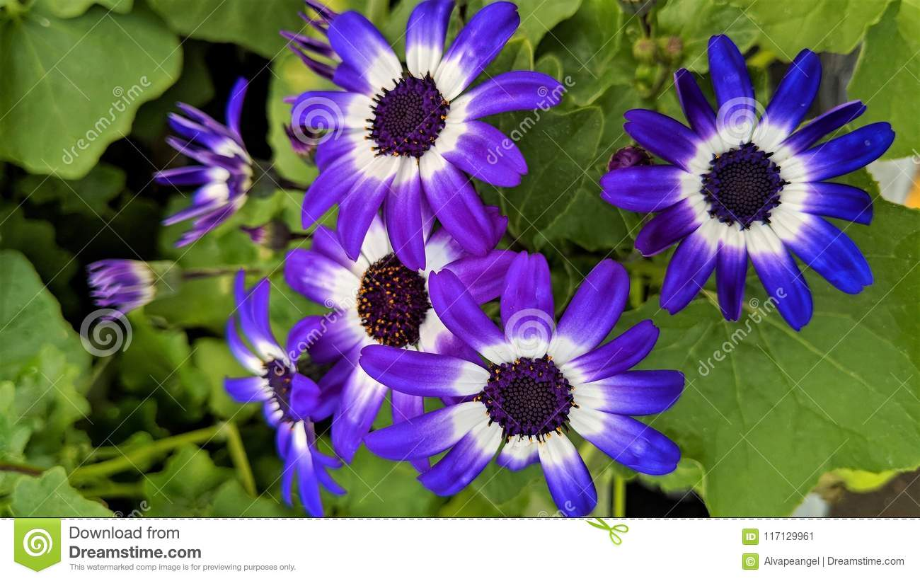 Small White And Purple Flowers Stock Image Image Of Backgrounds