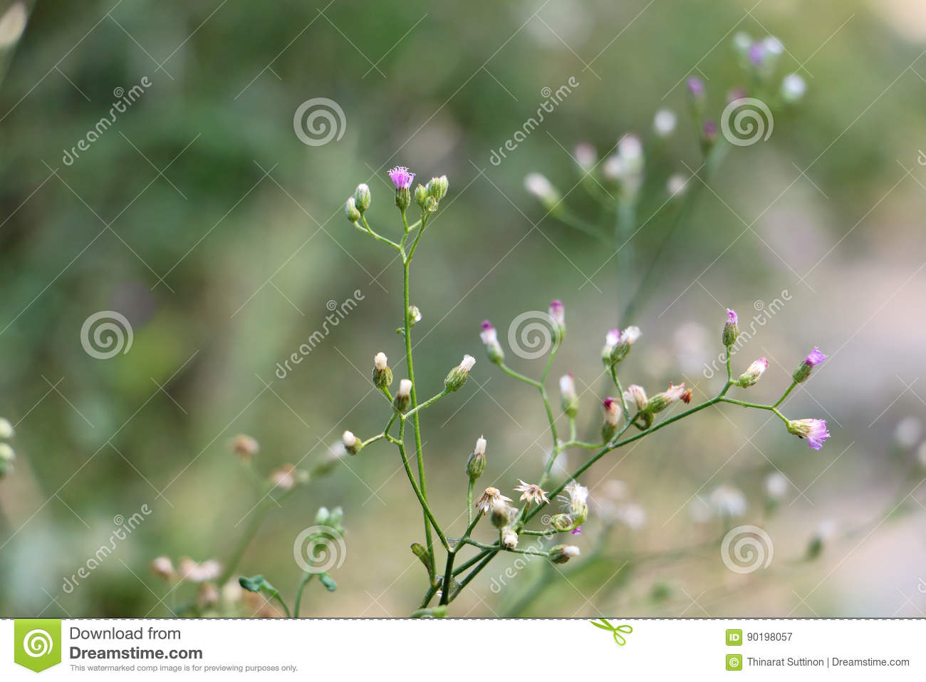 Small White And Purple Flowers Stock Image Image Of Background