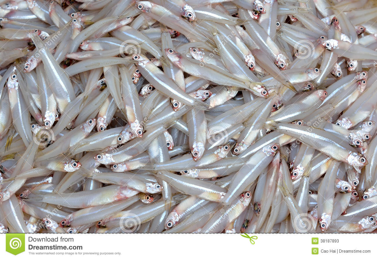 Small whitebait stock image. Image of agriculture, fish ...