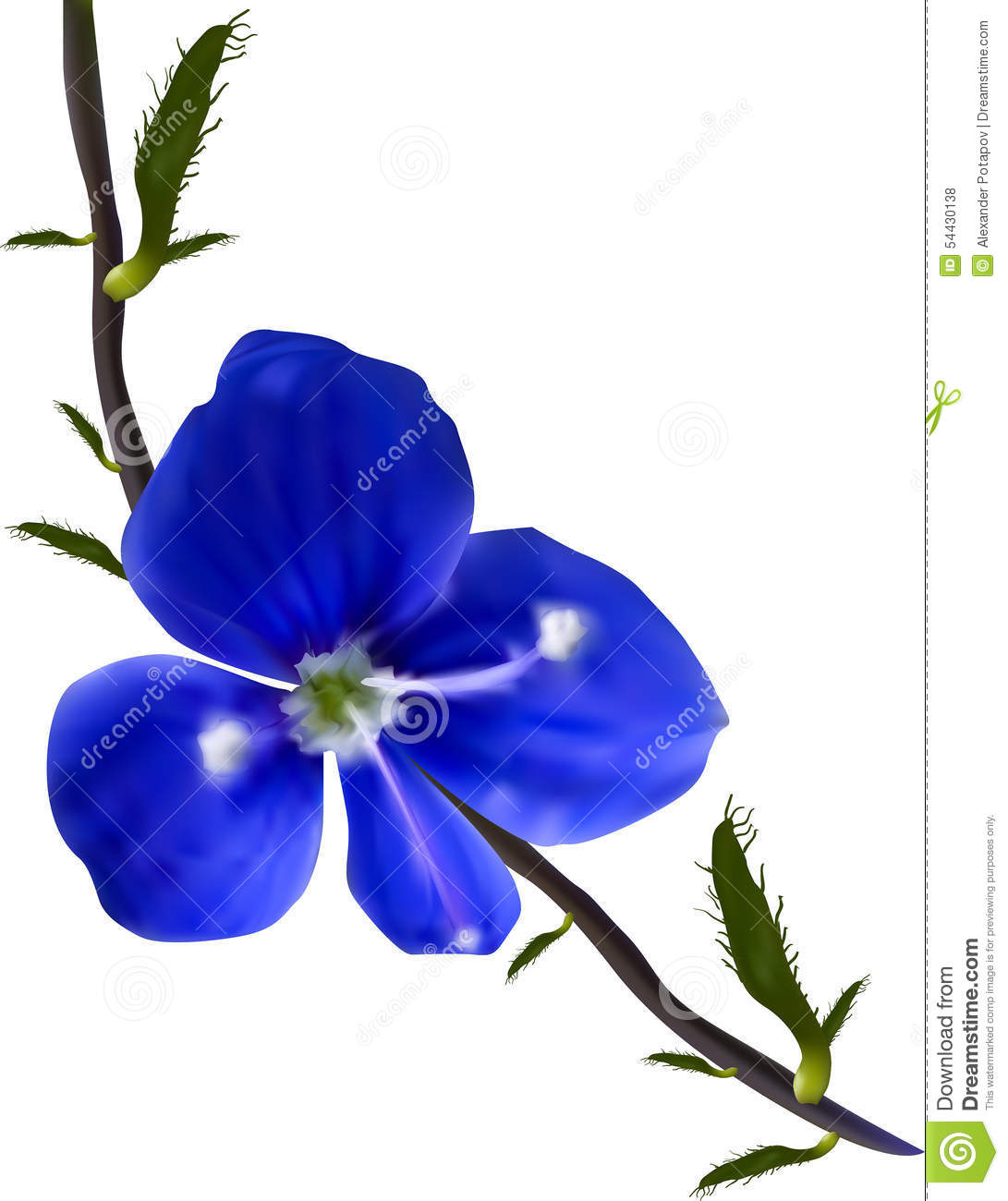 Dark Blue And White Flowers: Small Wild Dark Blue Flower Illustration Stock Vector