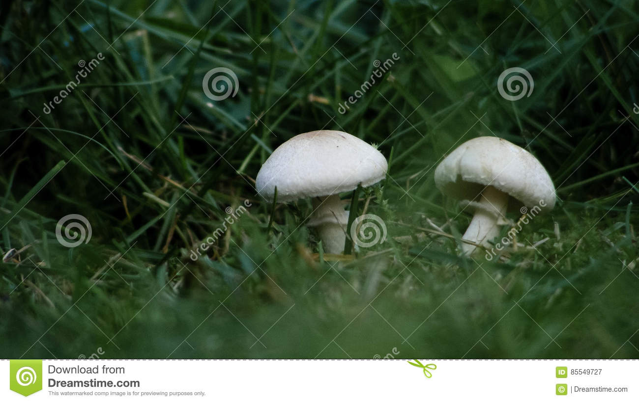 Small wild mushroom in the grass on a sunny spring, summers morning