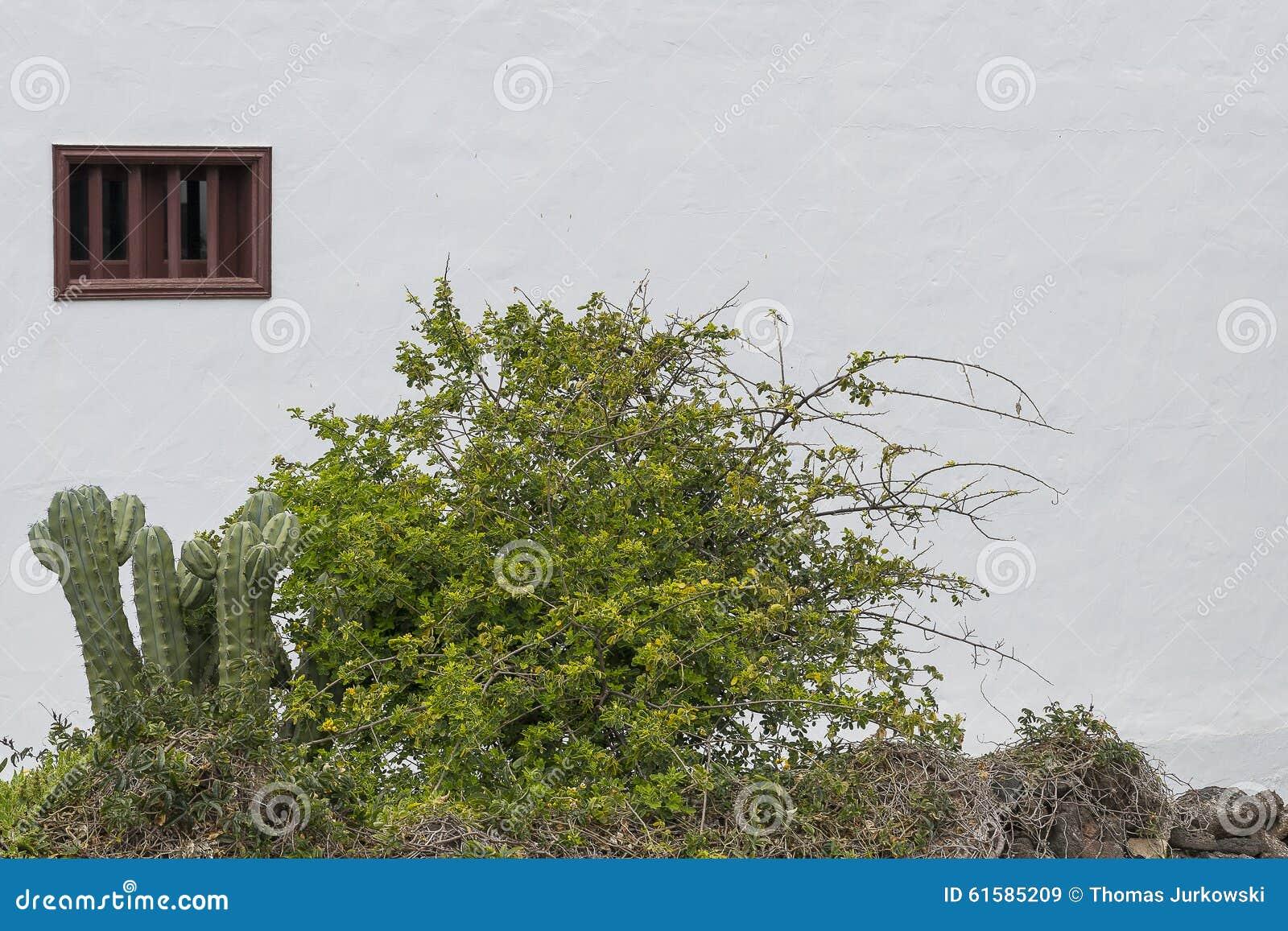 Window With Cacti Burano Venice Royalty Free Stock Image