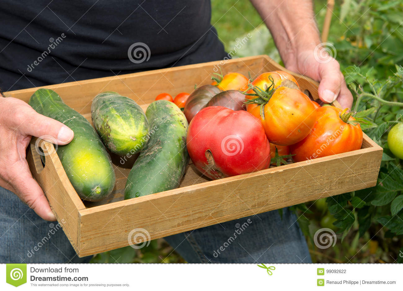 Small Wooden Crate With Vegetables From The Garden Stock Photo