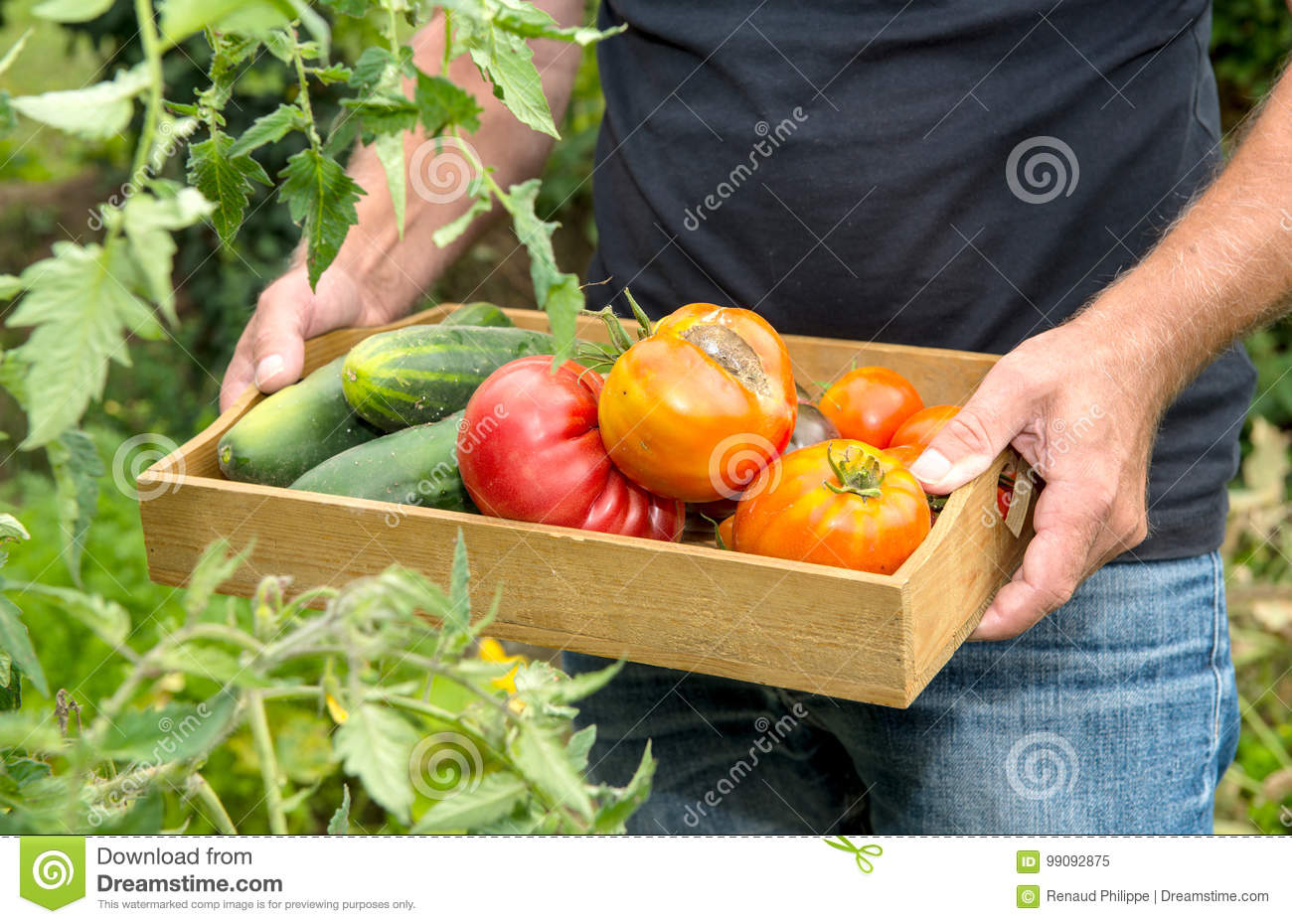 Small Wooden Crate With Vegetables From The Garden Stock Image