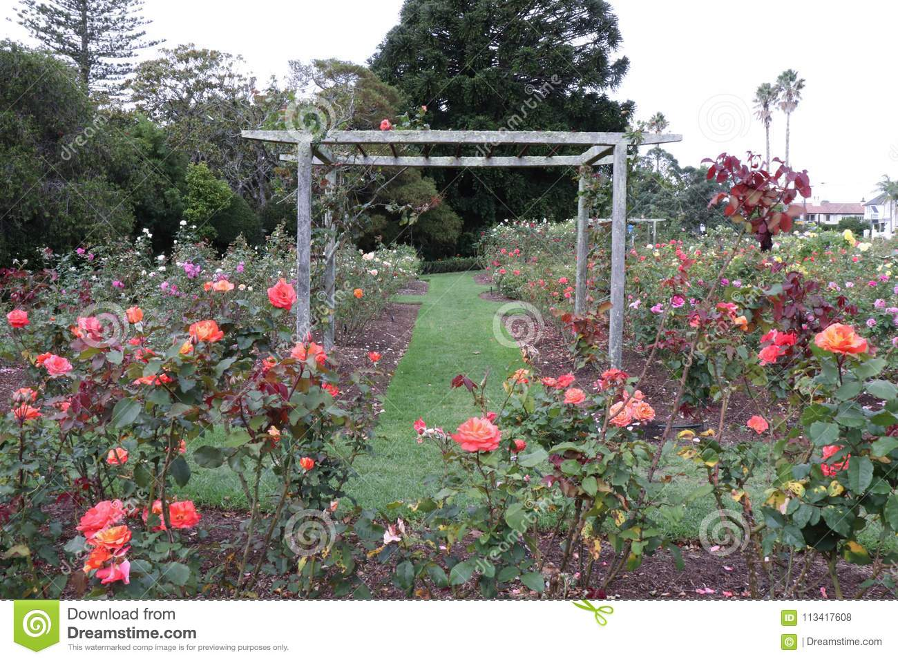 Wooden Garden Trellis In Rose Garden Stock Photo Image Of Public