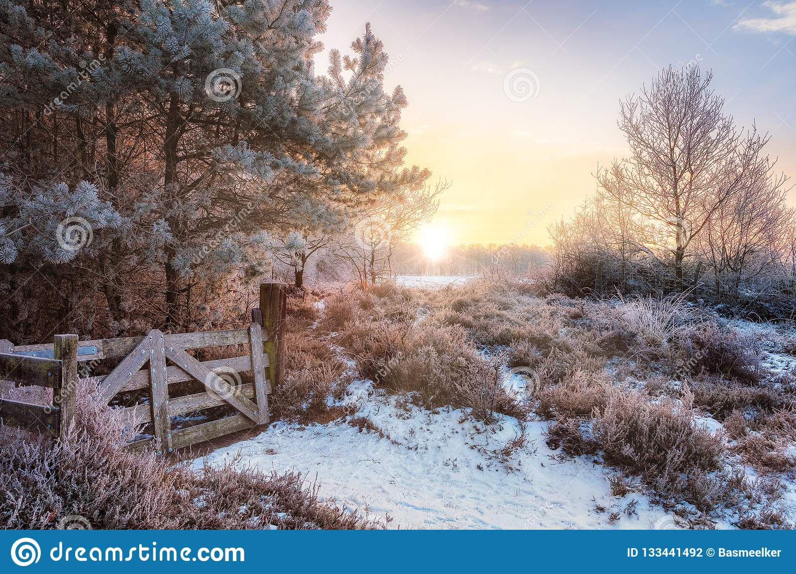 Meadow with frost in Netherlands