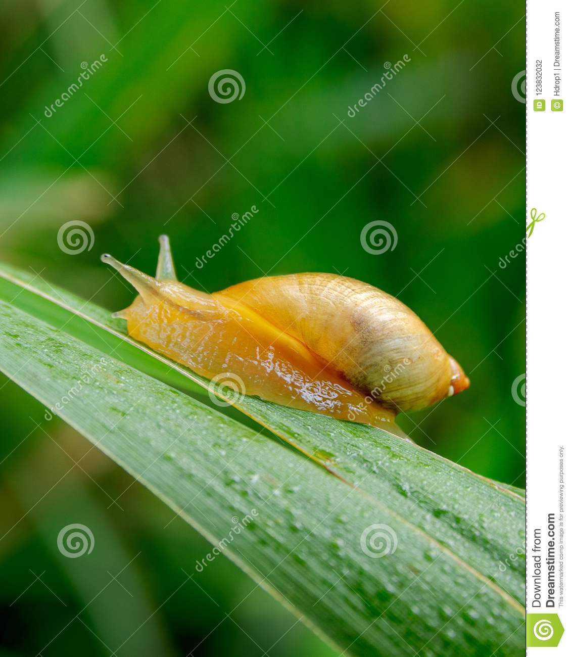 Small yellow baby snail on a leaf