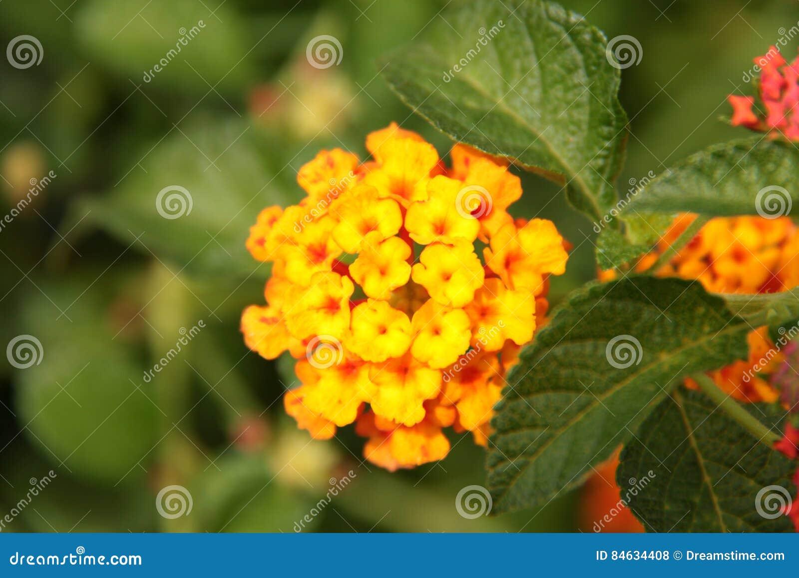 Small Yellow Flower Stock Photo Image Of Orange Foliage 84634408
