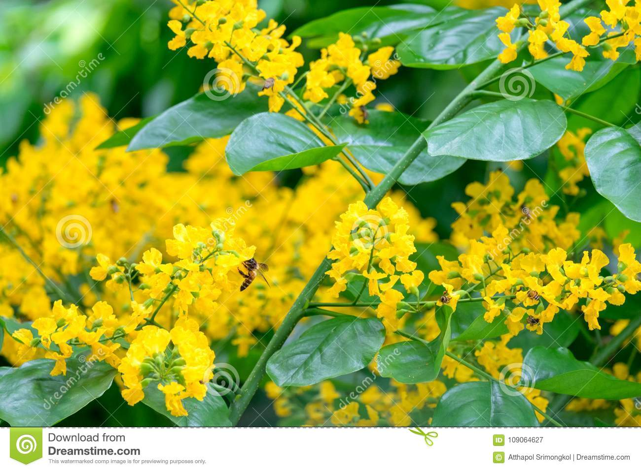 Small yellow flowers of a bouquet of flowers and bees on the tree download small yellow flowers of a bouquet of flowers and bees on the tree stock image mightylinksfo