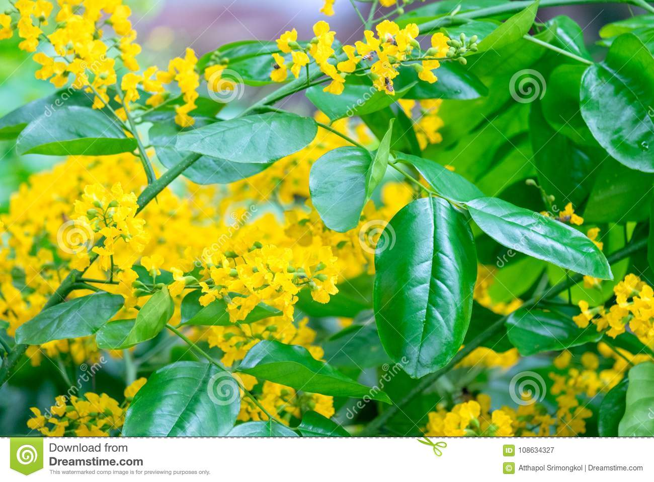Small yellow flowers of a bouquet of flowers on the tree stock image small yellow flowers of a bouquet of flowers on the trees mightylinksfo