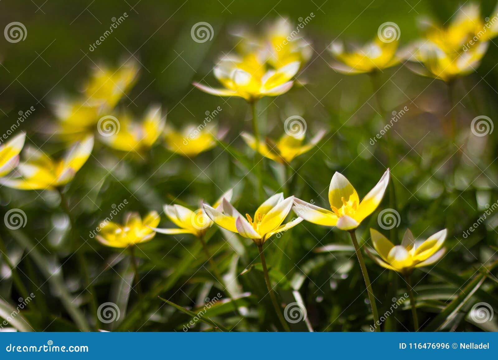 Small yellow flowers on flowerbed stock photo image of bright small yellow flowers on flowerbed mightylinksfo