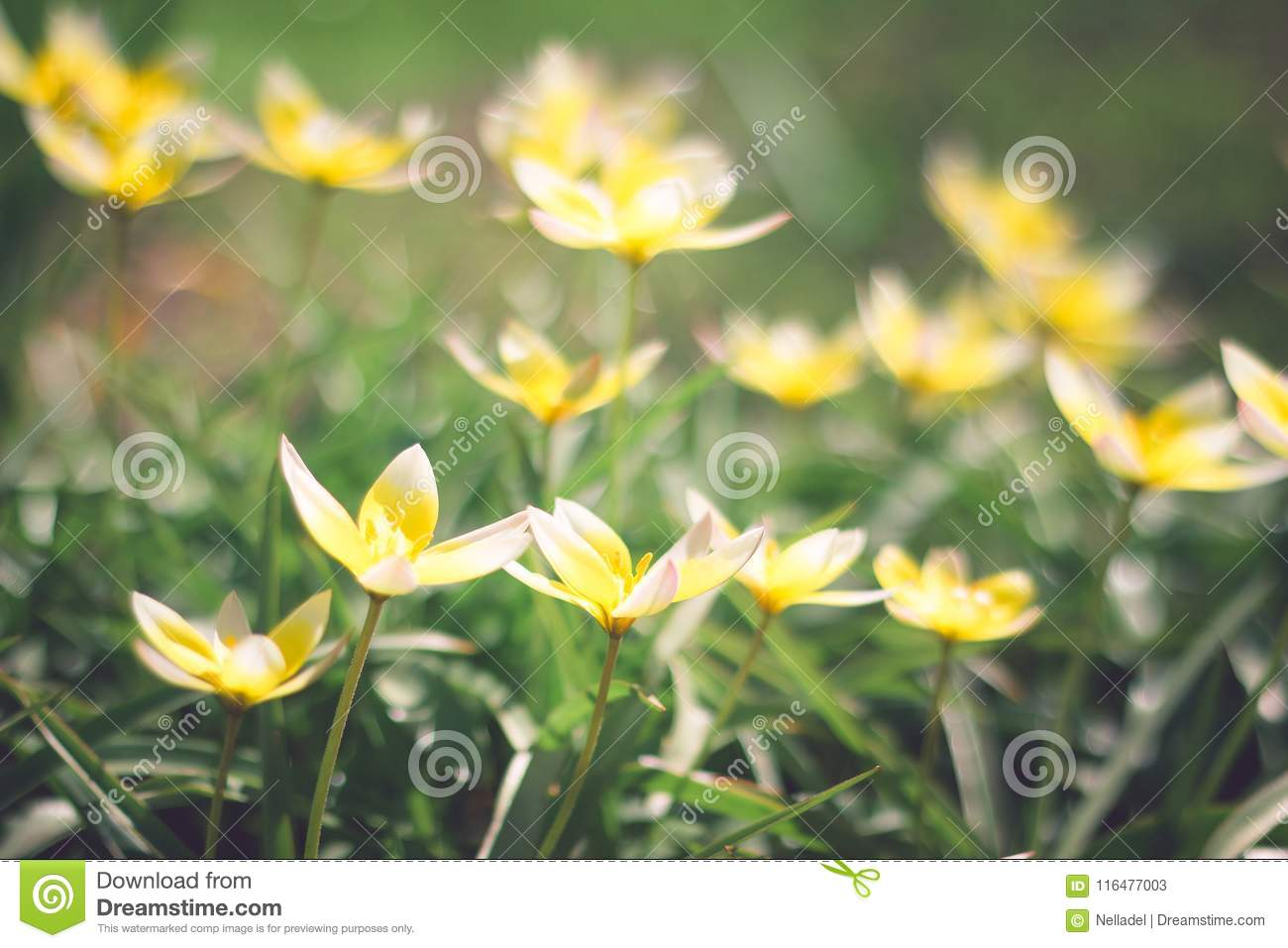 Small Yellow Flowers On Flowerbed Stock Image Image Of Ball