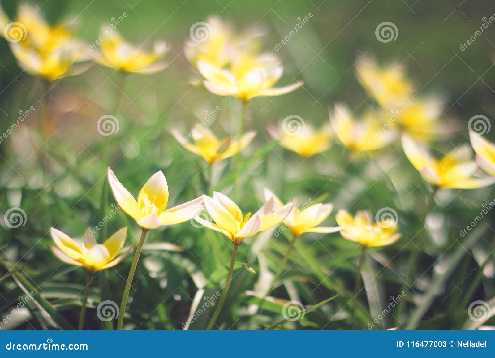 Small yellow flowers on flowerbed stock image image of ball small yellow flowers on flowerbed ball flower mightylinksfo
