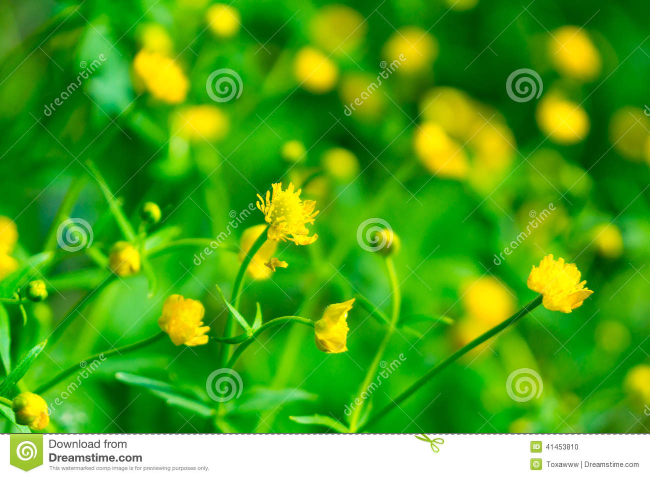 Small Yellow Flowers Stock Photo Image Of View Small 41453810