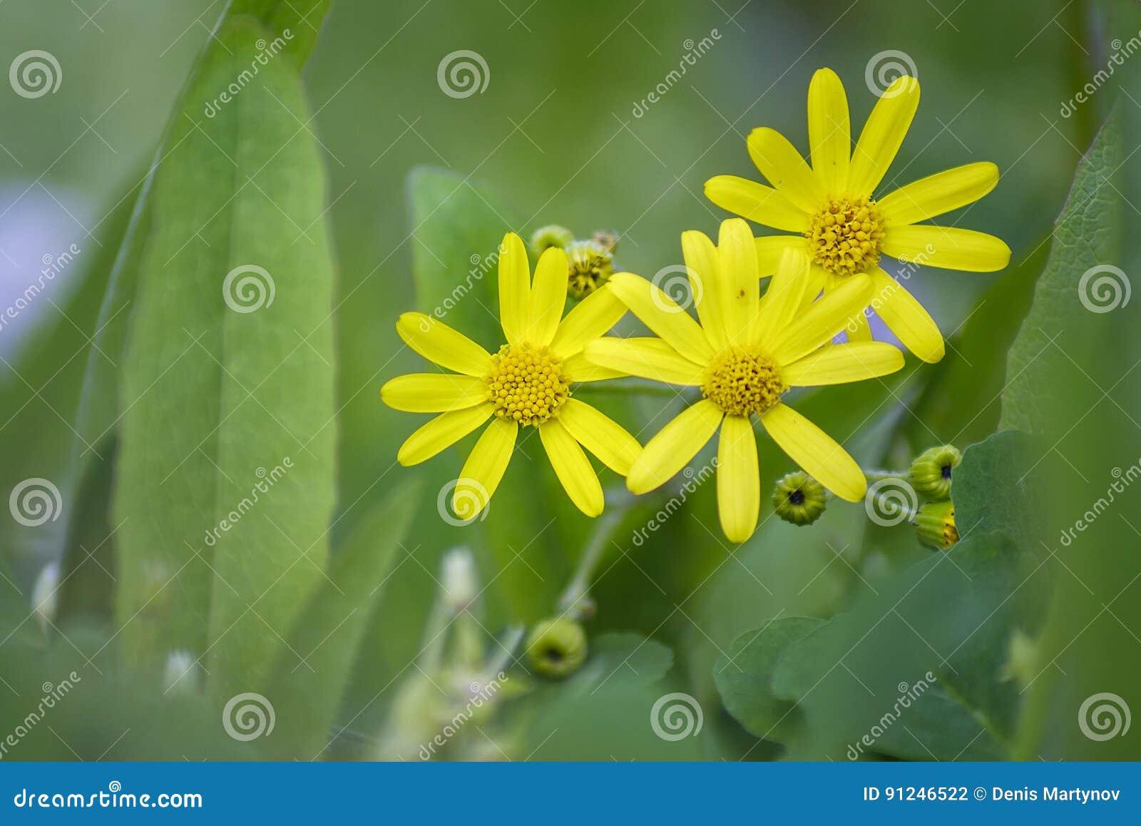 Small Yellow Flowers 3 Stock Photo Image Of Garden Lush 91246522