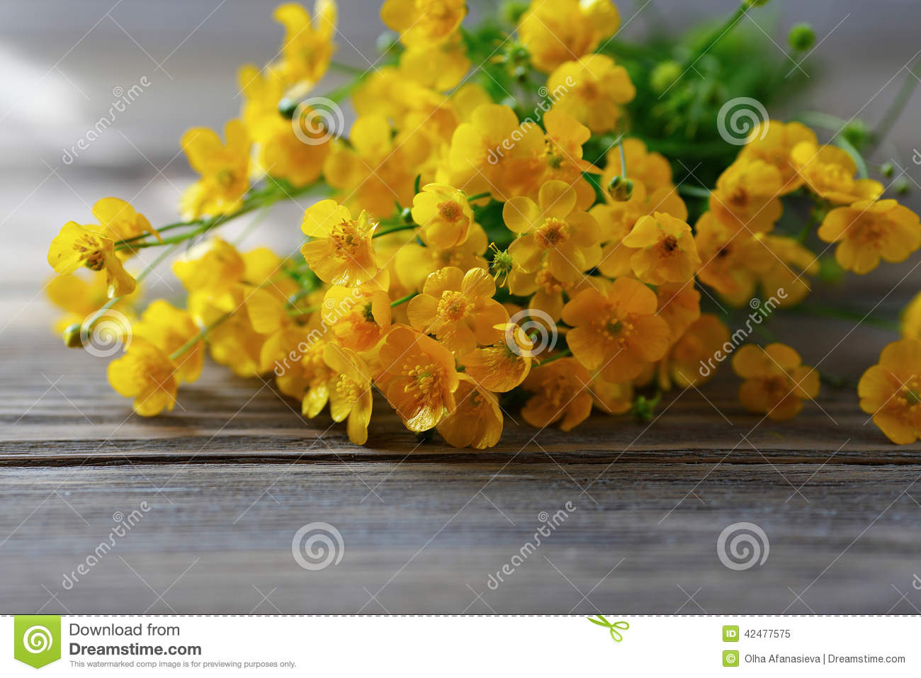 Small Yellow Flowers Stock Image Image Of Floral Life 42477575